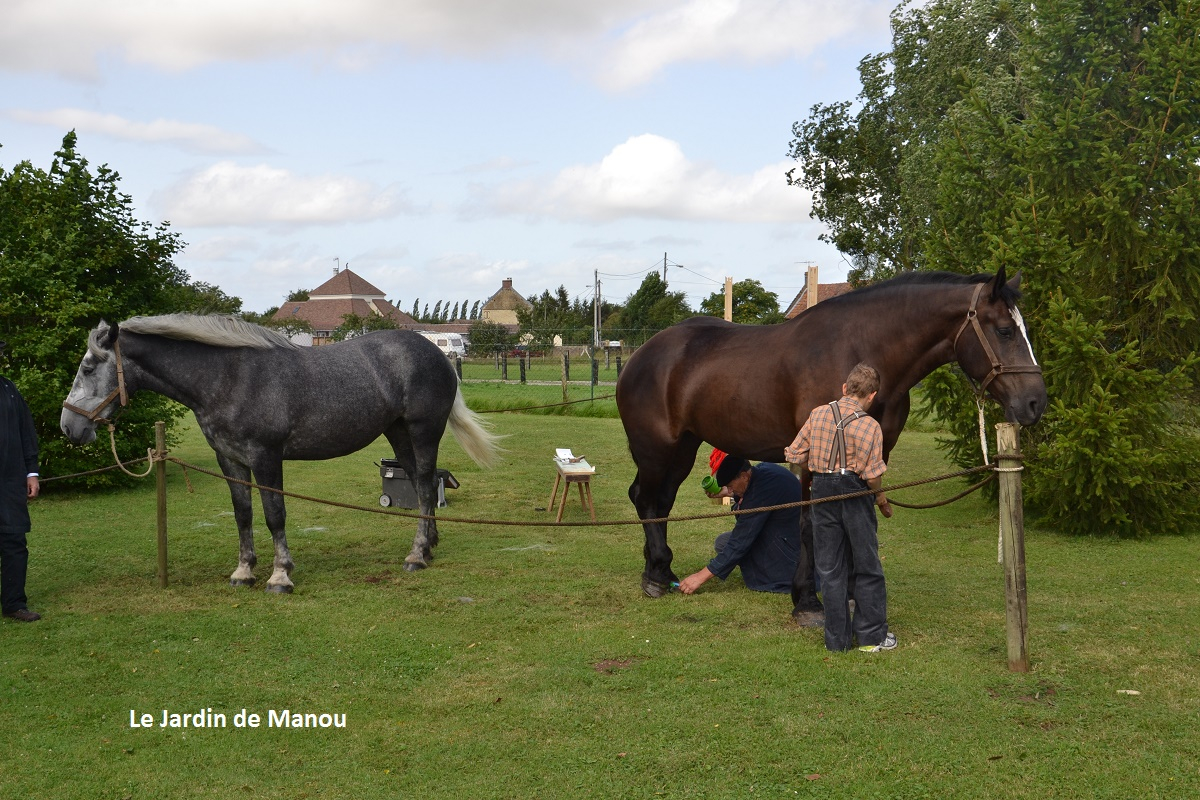 Les chevaux d'Etienne